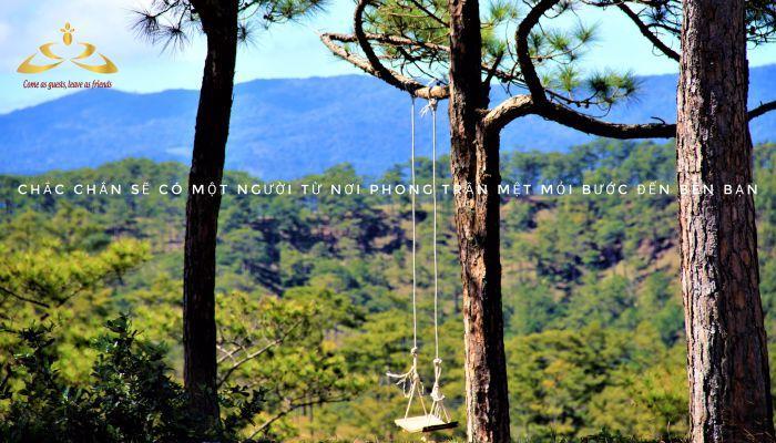 Cảnh đẹp giữa rừng thông