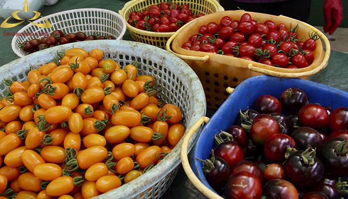 Qúy khách mua về làm quà các loại cà chua ngon và đảm bảo an toàn. (giá 70.000vnđ/kg)