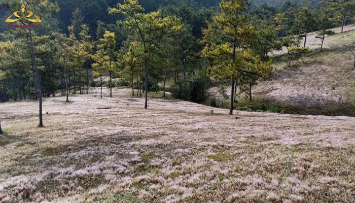 Đồi cỏ tuyết đẹp tại Thung lũng vàng