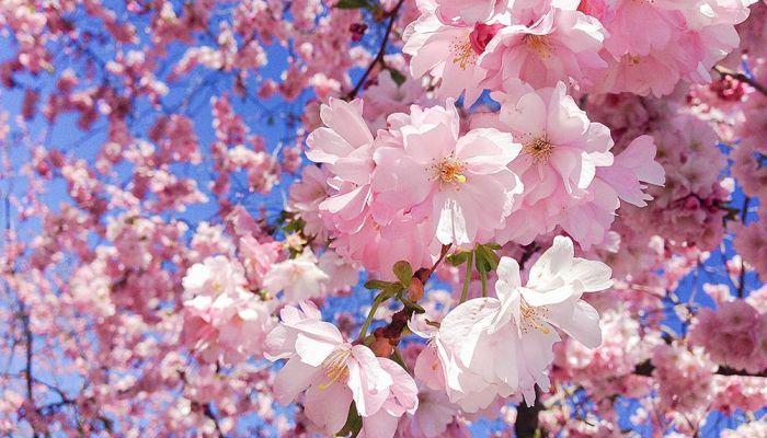 Ngắm hoa
