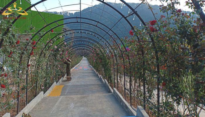 Con đường hoa hồng dài nhất Việt Nam đang trong quá trình hoàn thiện