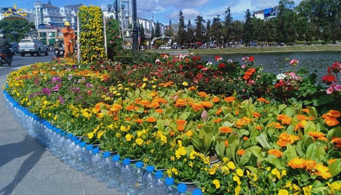 trồng hoa ở ven Hồ Xuân Hương