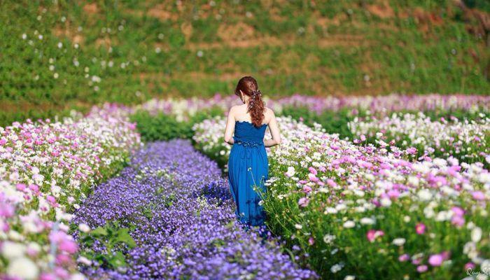 Triển lãm hoa cưới Đà Lạt