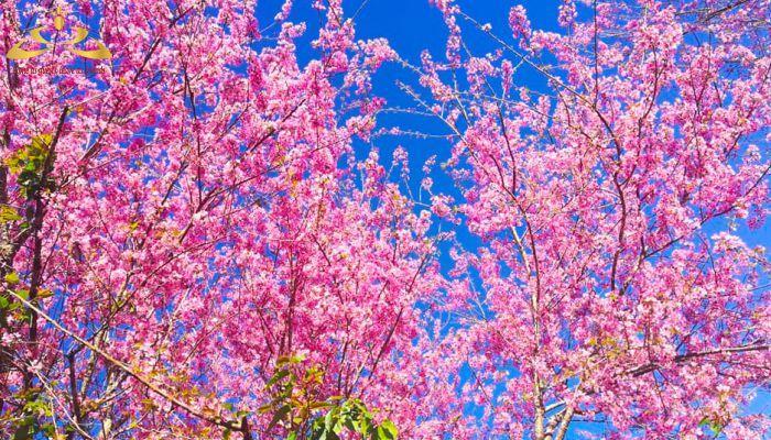 Mùa xuân ở Đà Lạt