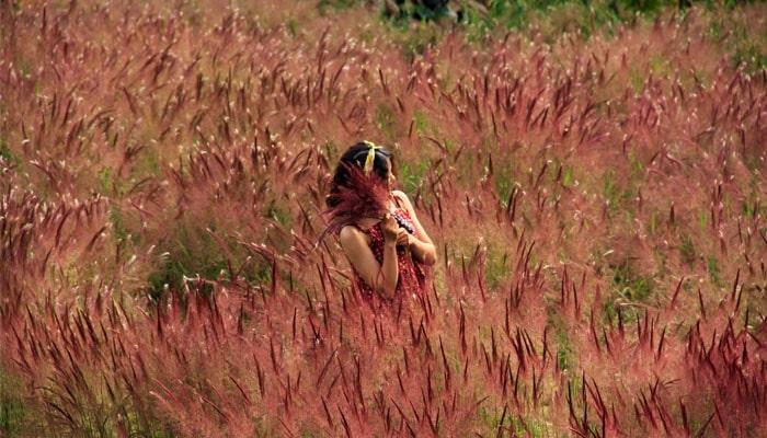 Cô gái giữa đồi cỏ hồng đuôi chồn
