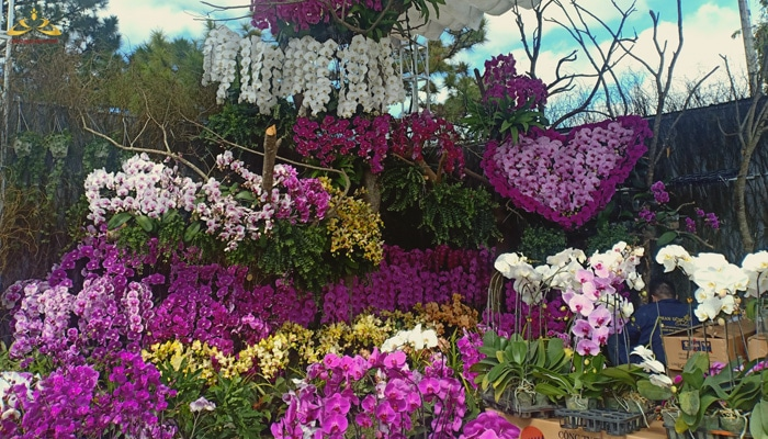 Trang trí hoa lan