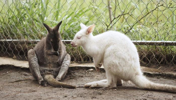Những con thú ở đây được chăm sóc rất chu đáo