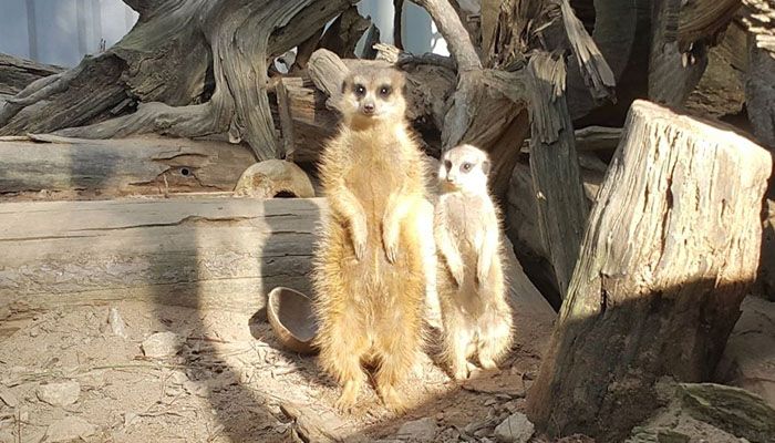 Vườn thú Đà Lạt