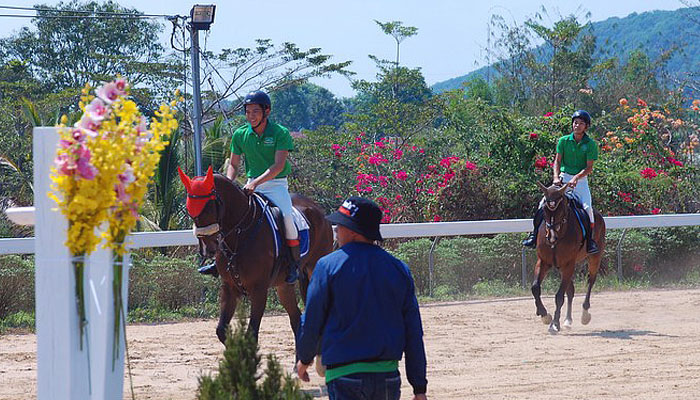 CLB Olympic đã đầu tư mua trên 2000 con ngựa thuần chủng