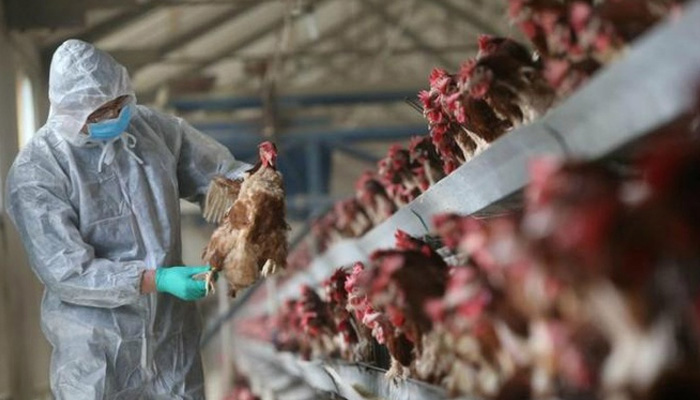 Tuyên truyền cho người dân về các biện pháp phòng, chống dịch cúm gia cầm A H5N1