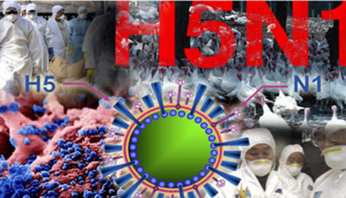 Dịch cúm gia cầm A H5N1