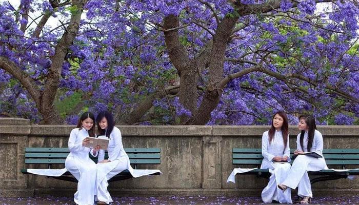 Cùng lưu giữ những khoảnh khắc đẹp nhất bên hoa phượng tím