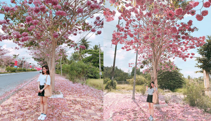 Bảo Lộc trở thành địa điểm chụp hình sống ảo bao hot dành cho các bạn trẻ
