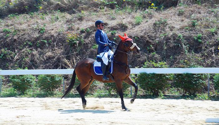 Các vận động viên đang làm quen với ngựa
