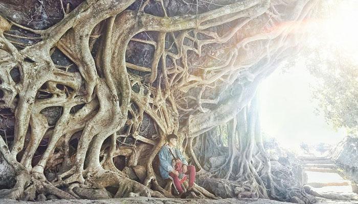 Những rễ cây to cổ thụ ở thác Dray Nur