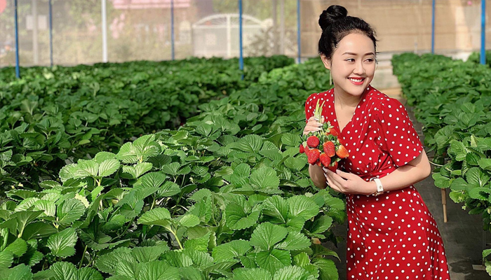 Vườn dâu tây công nghệ cao
