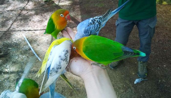 Vườn thú Zoodoo