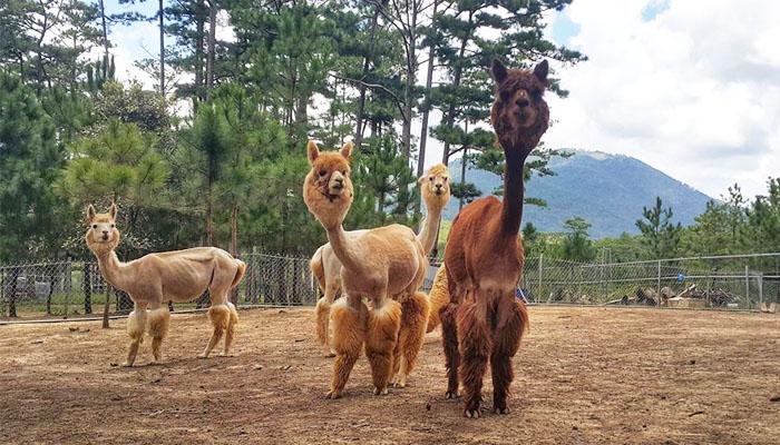 Sở Thú Zoodoo Đà Lạt- tour đà lạt 1 ngày