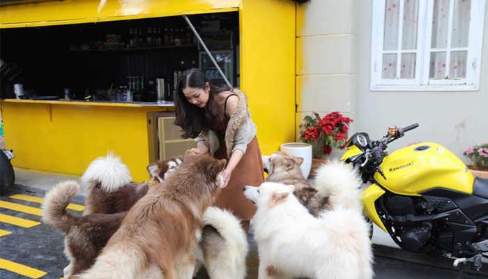 Top 5 quán cà phê thú cưng Đà Lạt 2020