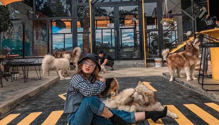 Hội quán chó mèo Đà Lạt - quán cà phê thú cưng Đà Lạt đang làm mưa làm gió 2020