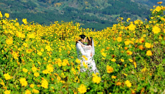 Du lịch Đà Lạt mùa đông – nhuộm vàng hoa dã quỳ
