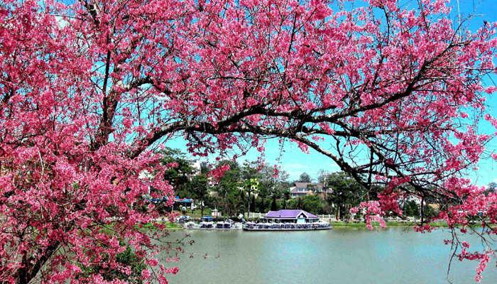 Du lịch Đà Lạt vào mùa xuân