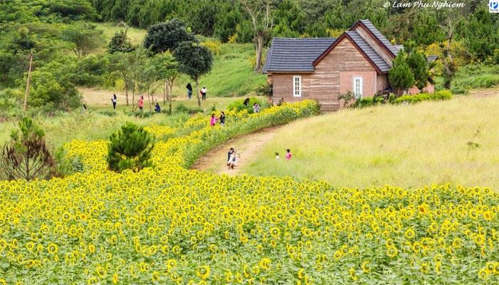 View siêu đẹp của Dalat Milk Farm
