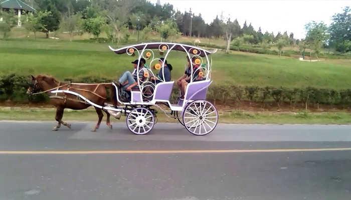 Thuê xe ngựa